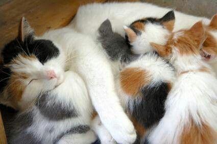 Love Bundle Cat Birth Pregnant Cat Cat Facts