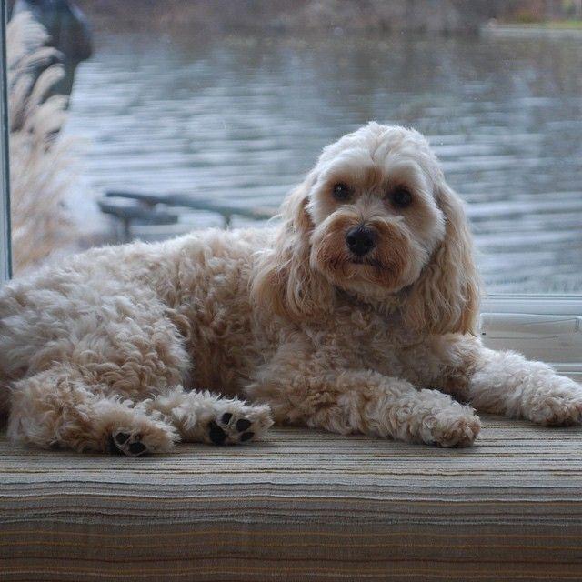 #dog #dogoftheday #doggie #doga