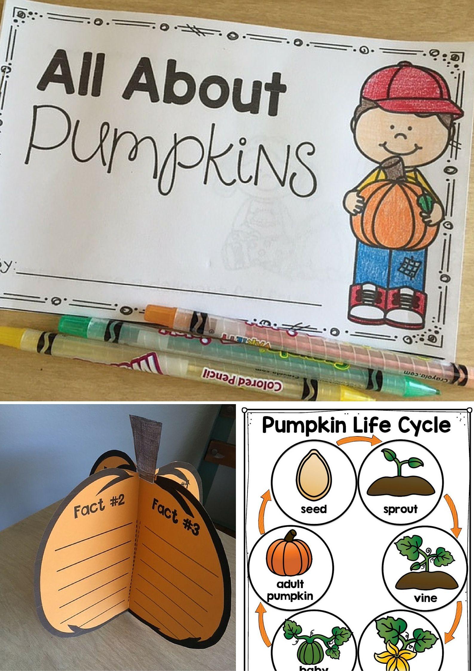Pumpkins Unit Pumpkin Life Cycle Pumpkin Investigation