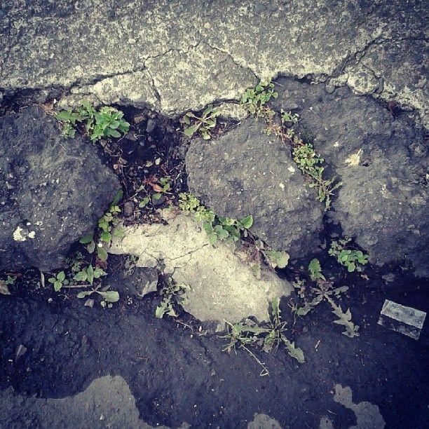 #resistencia #Colombia #Bogotá #ecodiseño #Medioambiente  #diseño #fotografia #eco #rse  #ecodiseno  #diseno #Bogota #ecodesign #design #photography #sustainability #add #advertising http://instagram.com/soy_juliagallo  http://juliagallo.co