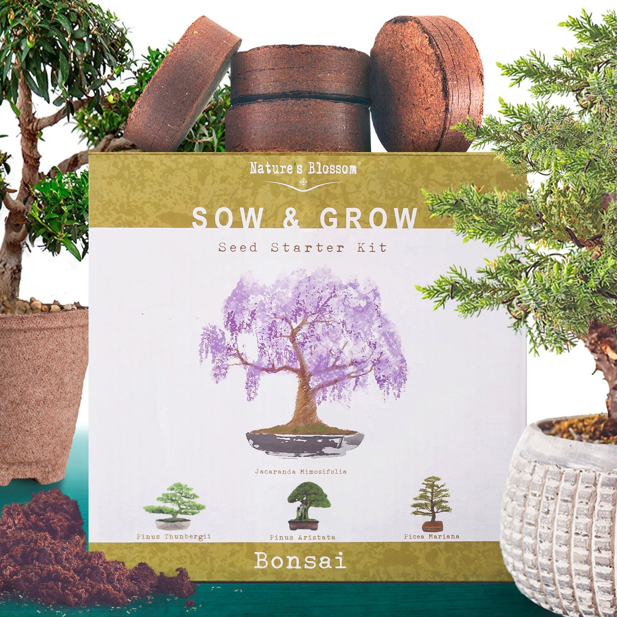 Nature S Blossom Bonsai Tree Kit Grow 4 Types Of Trees From Seed In 2020 Bonsai Tree Types Bonsai Tree Tree Seeds