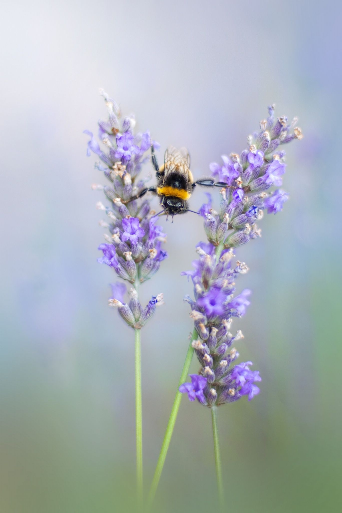 Summer Splits By Jacky Parker On 500px Mit Bildern Blumenbilder Bilder Bienen