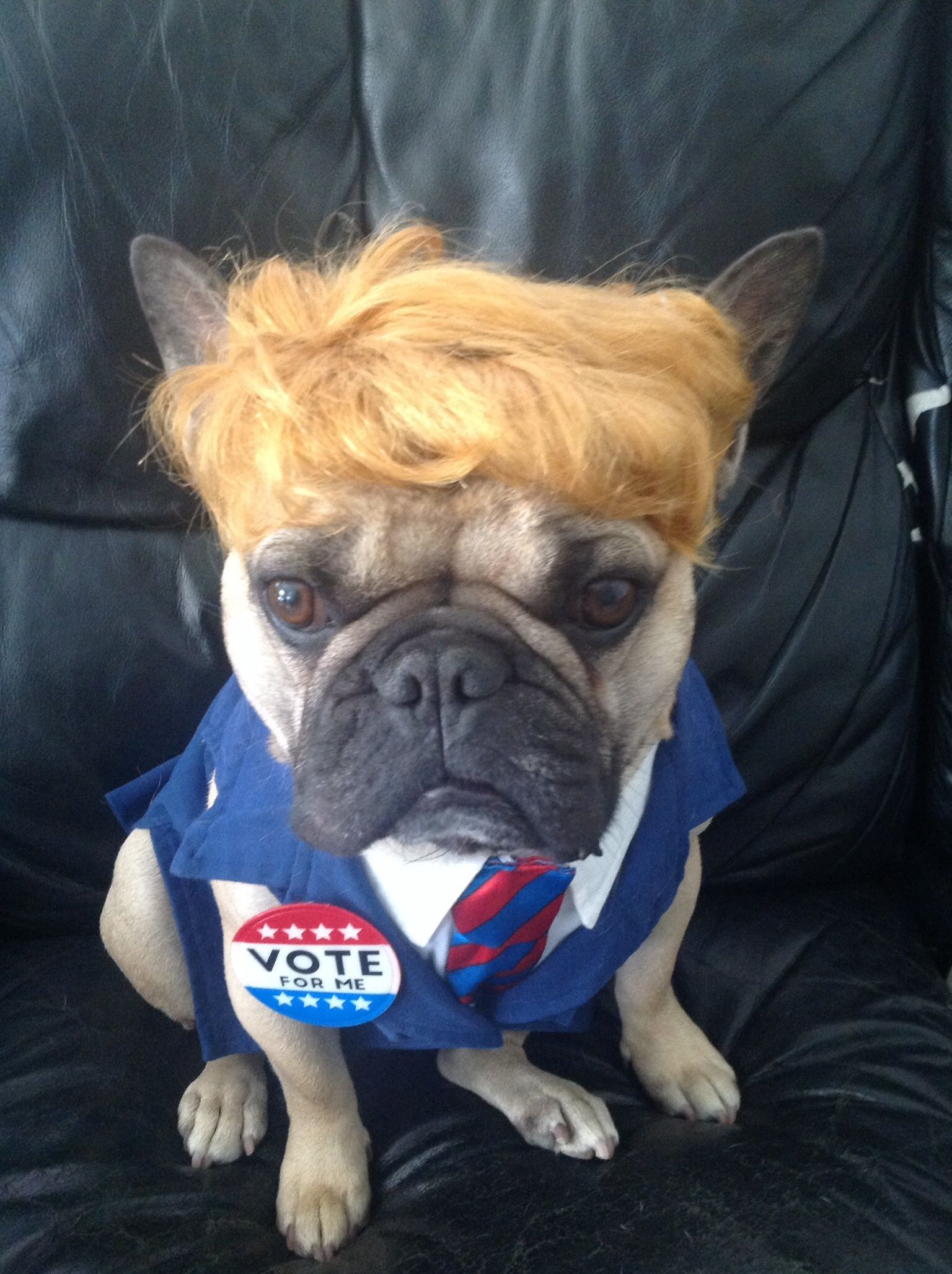 trump costume french bulldog DOG COSTUME WALDO & trump costume french bulldog DOG COSTUME WALDO | Halloweener ...