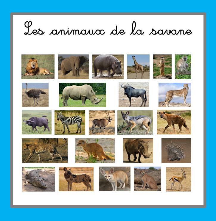 Images classifi es les animaux de la savane ti - Animaux de la jungle maternelle ...