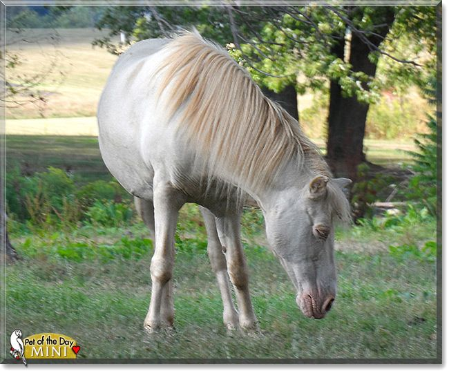 Read Mini S Story The Miniature Pony From Erie Pennsylvania And See Her Photos At Pet Of The Day Http Petoftheday Com Archive 201 Miniature Ponies Pony Pets