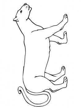 Walking Mountain Lion Lion Coloring Pages Mountain Lion Lion Craft