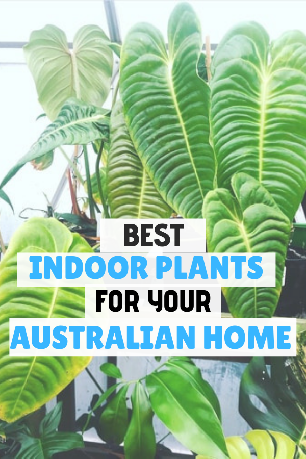Find indoor plants that would be perfect for your house ...