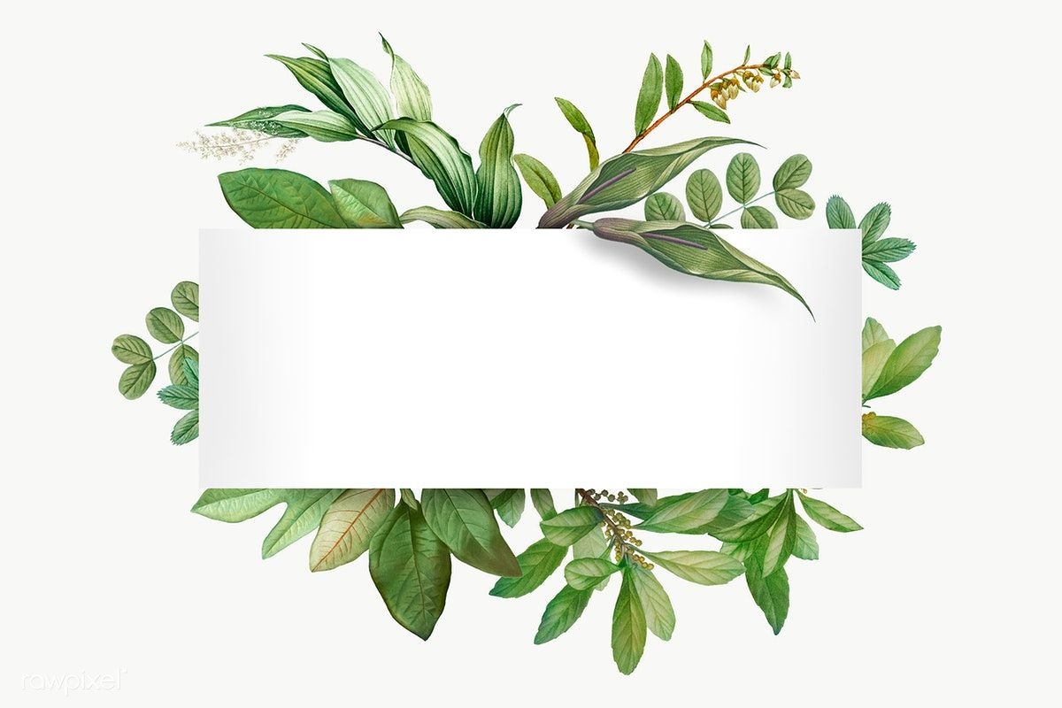 Download Premium Png Of Tropical Botanical Banner Transparent Png 585027 Graphic Design Posters Flower Background Wallpaper Wreath Illustration