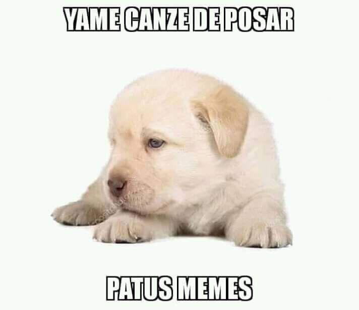 Pin De Delfu Lightt En Perrito De Stock Memes Divertidos Memes De Animales Divertidos Memes