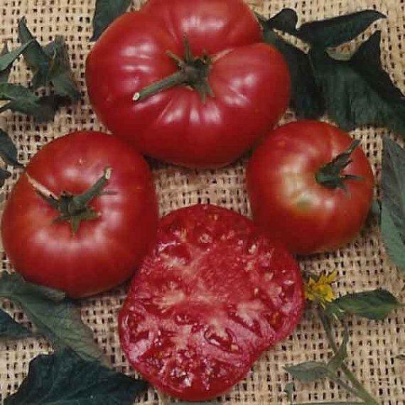 Pink Brandywine Seed Brandywine Tomato Heirloom Tomato 640 x 480