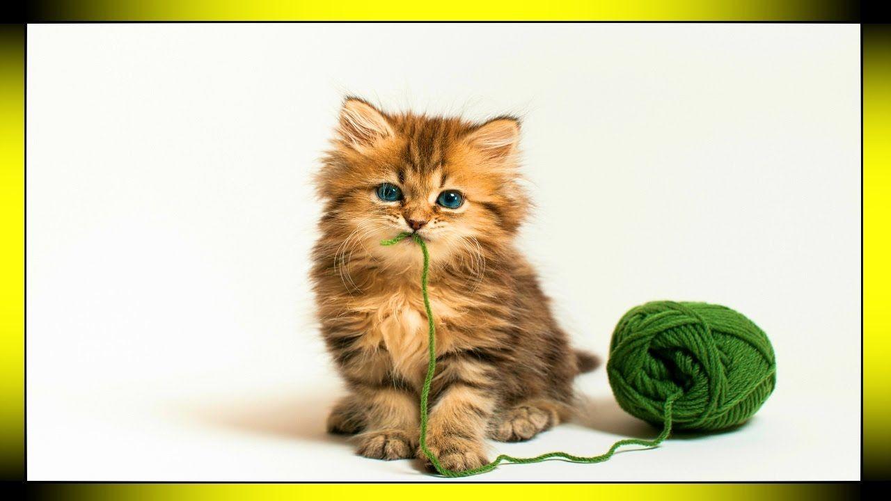 Playful Children Music Visualization Quirky Funny Music For Kids Kittens Cutest Kitten Pictures Kitten Wallpaper