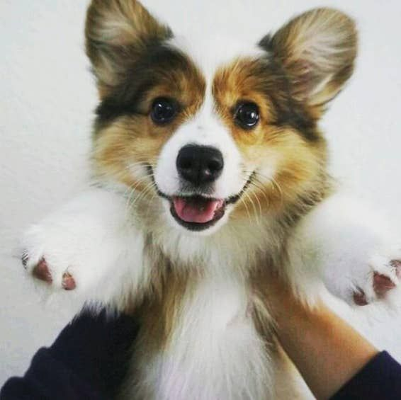 17 Happy Floofernuggets Who Just Want To Give You Cuddles | Floofer