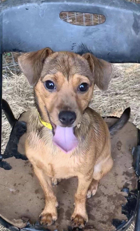 Adopt Radley on Petfinder Help homeless pets, Paws
