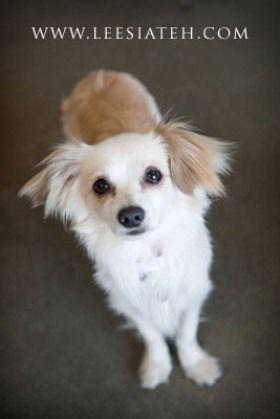 Best Friends In Atlanta Dog Adoption Cat Adoption Animal Society