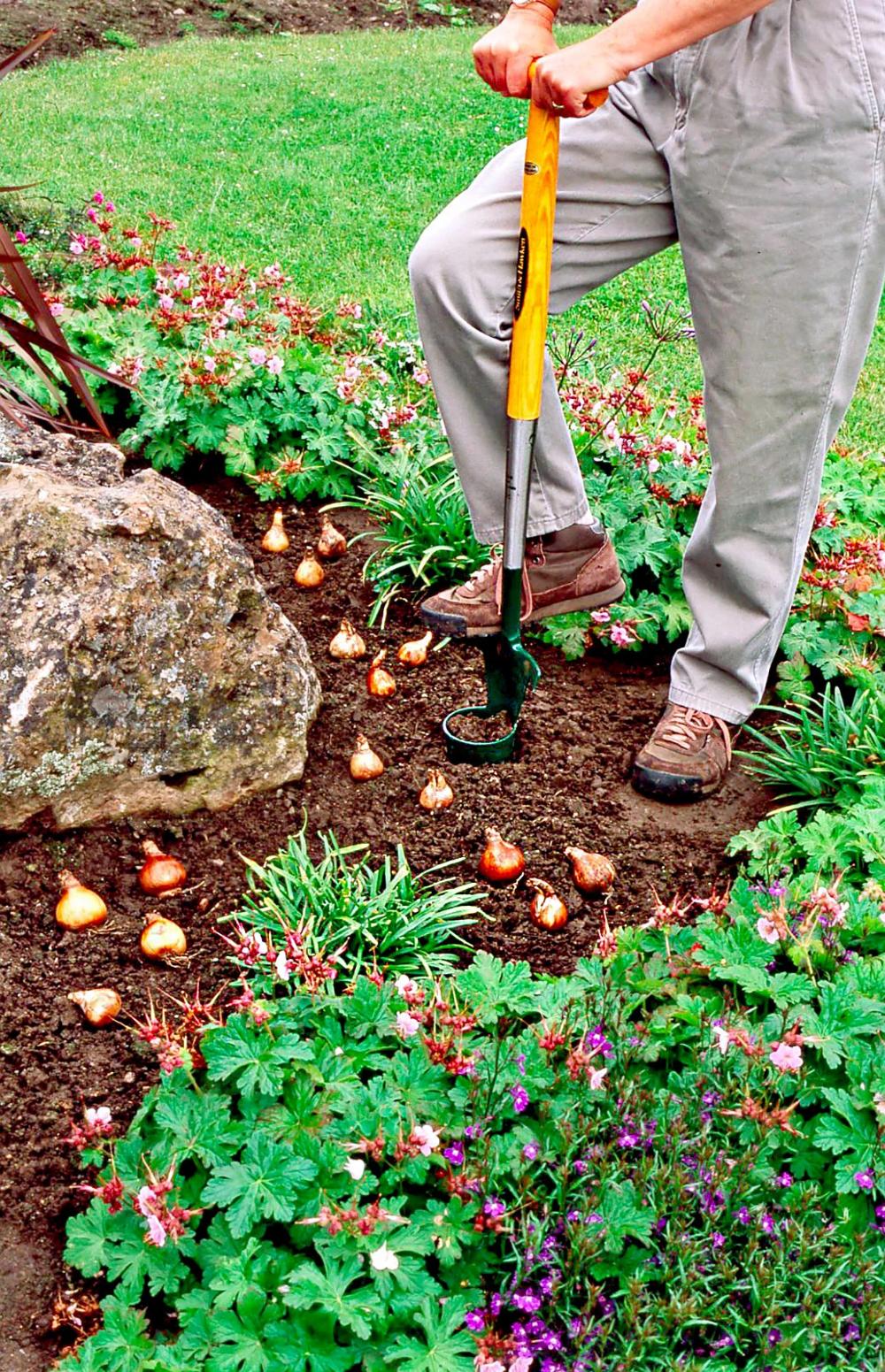 person-garden-tool-plant-bulbs-106f4d55