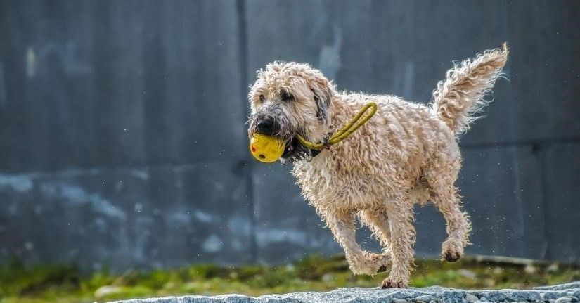 Everything You Need to Know About Dog Fitness Trackers