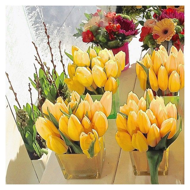 From the deepest dark to blinding light. Watching the frost slowly climb up the window we should remind ourselves how good we have it despite the winter weather. Tulips will take us to spring!