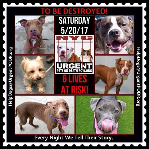 TO BE DESTROYED 05/20/17