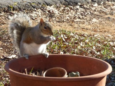 Potted plants and squirrels learn how to protect - How do you keep squirrels out of your garden ...