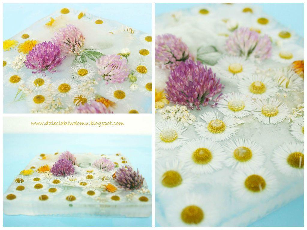 Polne Kwiaty Tworzymy Lodowe Obrazy I Kompozycje W Wodzie Dzieciaki W Domu Flower Ice Ice Pictures Flowers