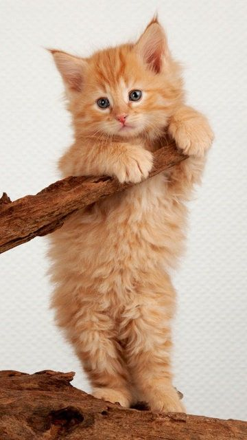 Beautiful Cats Image By Rares Onet On Gatitos In 2020 Kittens