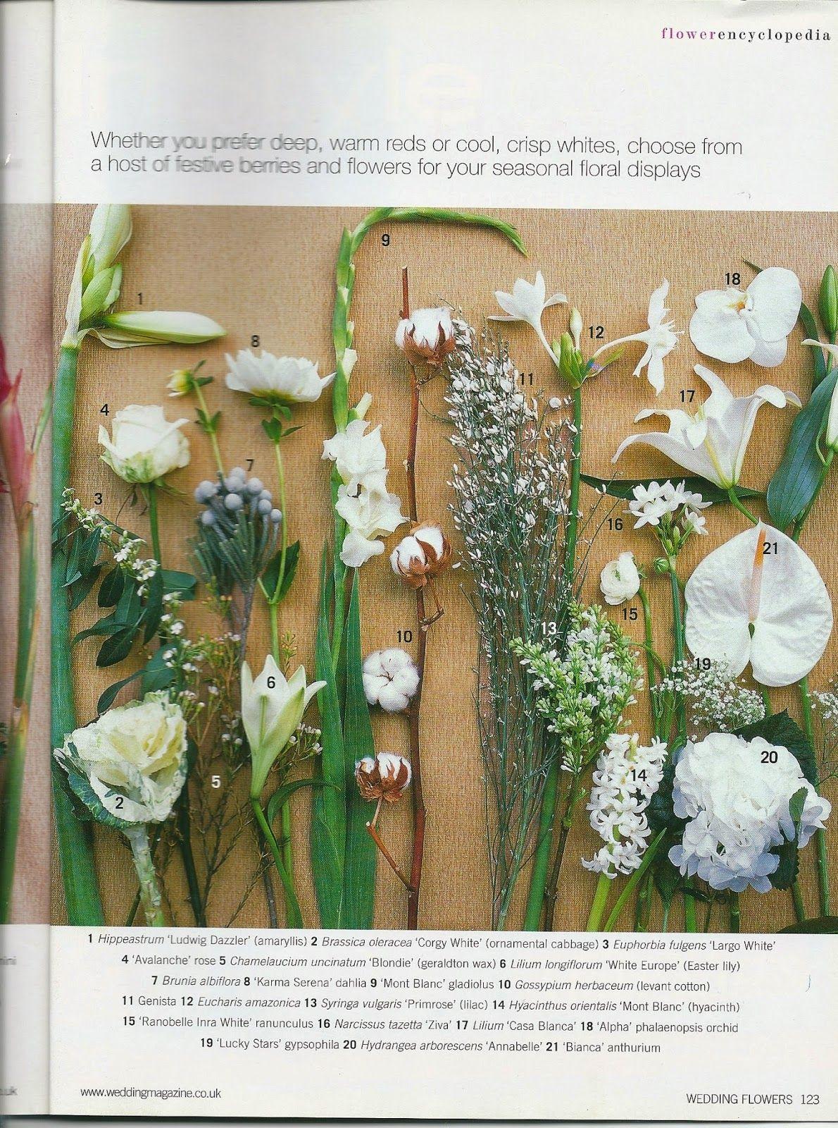 Zimowe Kwiaty Ciete