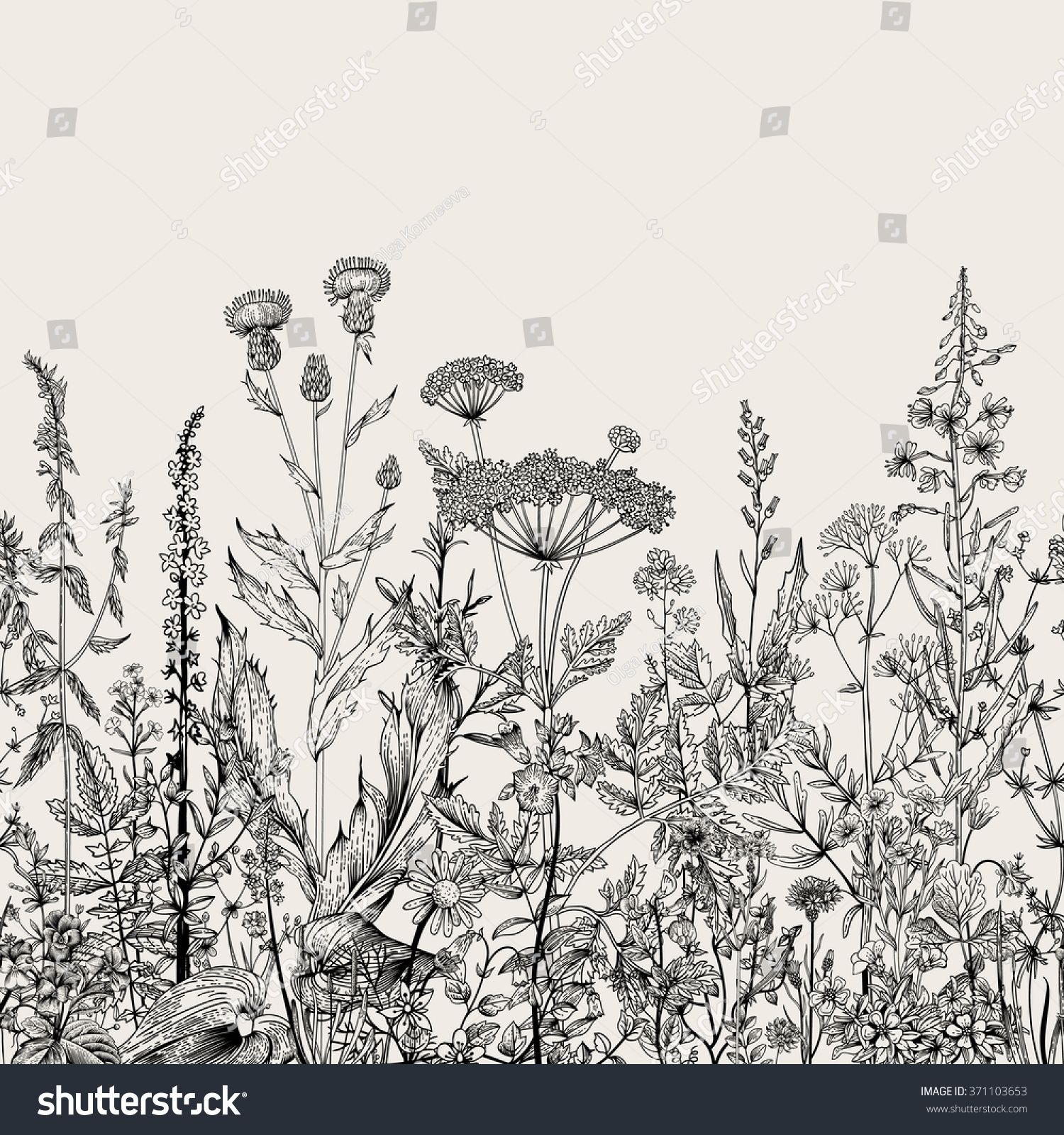 Vector seamless floral border. Herbs and wild flowers. Botanical ...