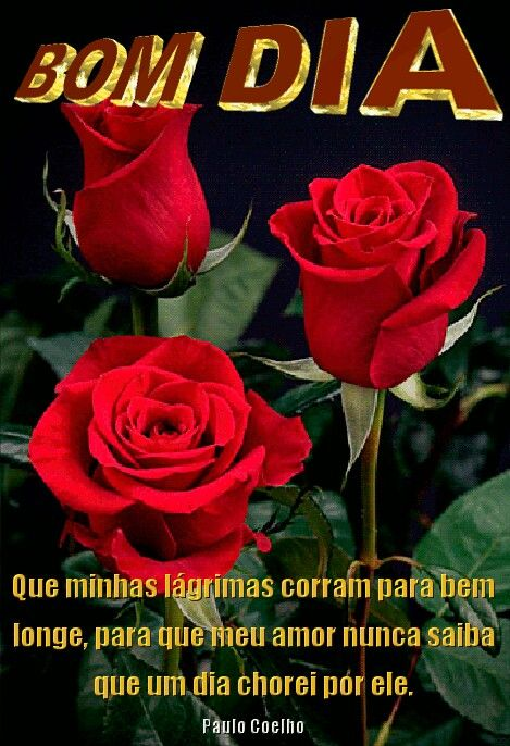 Bom Dia Poesiacitaçõesfrasesetc Red Roses Flowers E