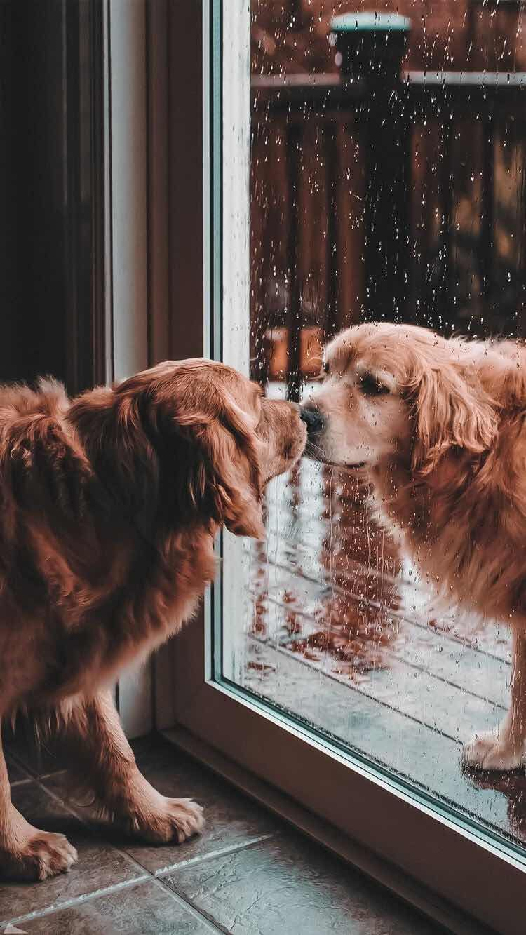 Iphone And Android Wallpapers Cute Dogs Wallpaper For Iphone And Android Android Cute Dogs Dogs Aesthetic Dogs An In 2020 Cute Dog Wallpaper Cute Animals Puppies