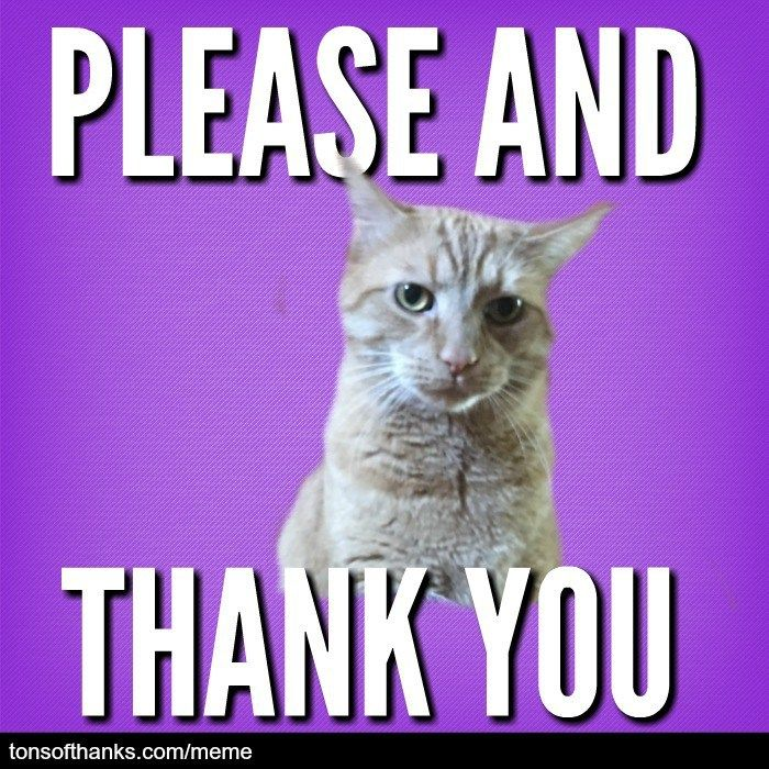 51 Nice thank you memes with cats Thank you memes, Thank