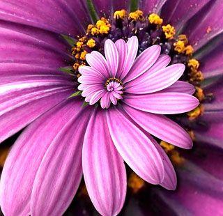 violet flower - Google Search