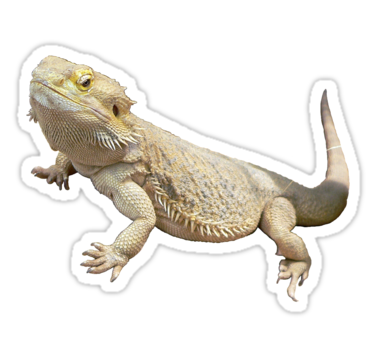 Bearded Dragon Sticker By Squishygay Bearded Dragon Baby Cradle Beard Colour
