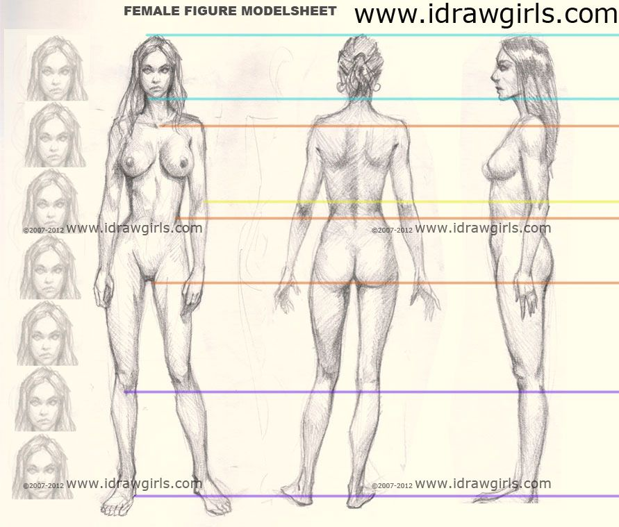 Female Figure Anatomy Proportion From Front Side And Back View