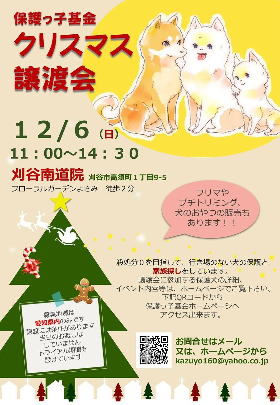 ポメラニアン メス 現 愛知県 犬の里親募集 334448 ペットのおうち 月間利用者150万人 里親 ポメラニアン 犬
