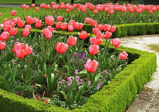КАК КРАСИВО ПОСАДИТЬ ЦВЕТЫ (с изображениями) | Растения ...