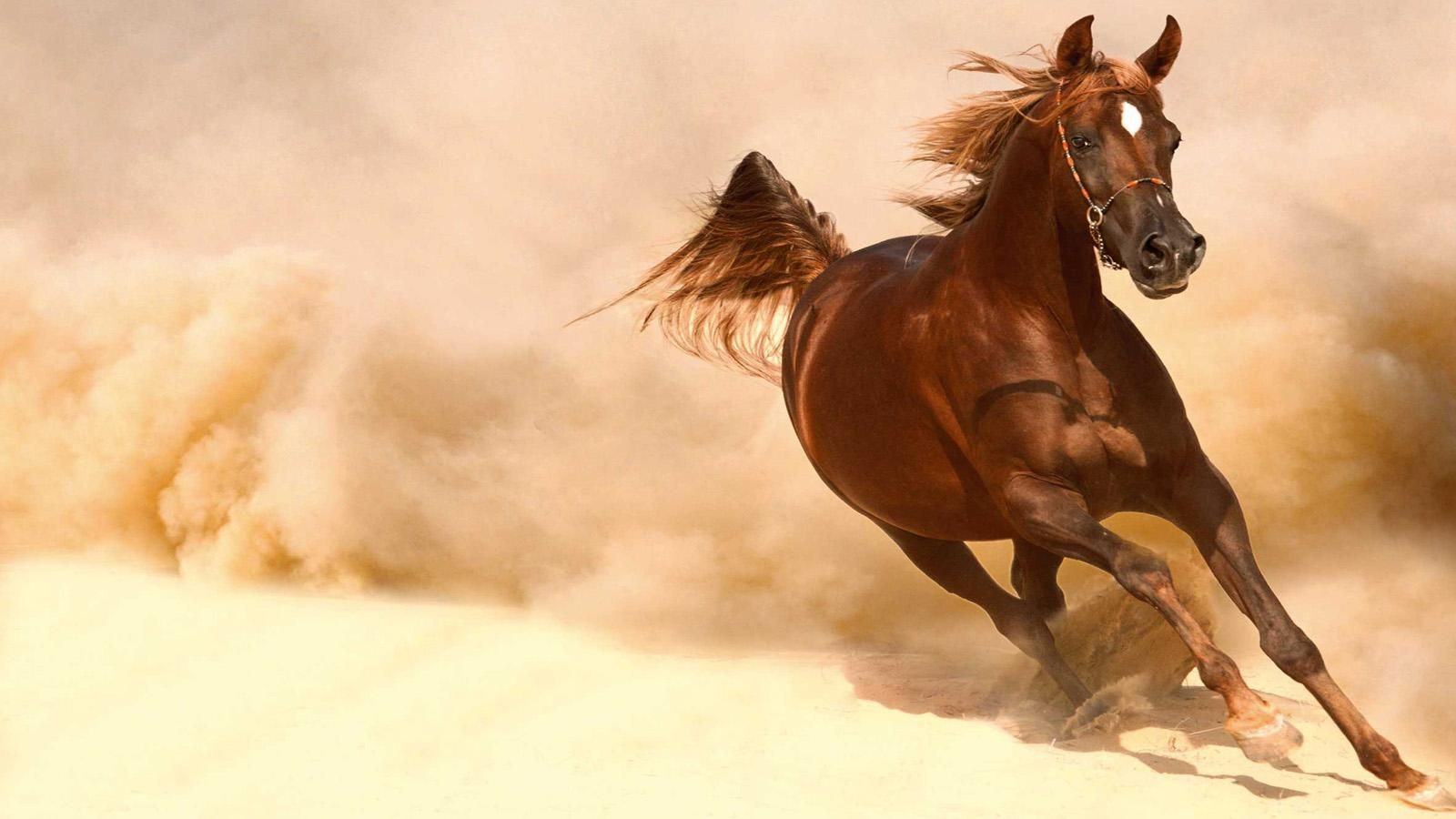 Download Wallpaper Horse Desert - 8dd6d4bcb7748733c9a70a222b109049  Graphic_494645.jpg