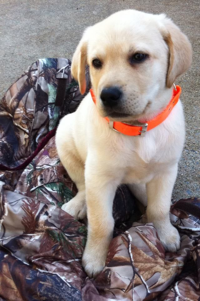 Pin By Katelyn Sullivan On Adorable Dogs Hunting Dogs Animals