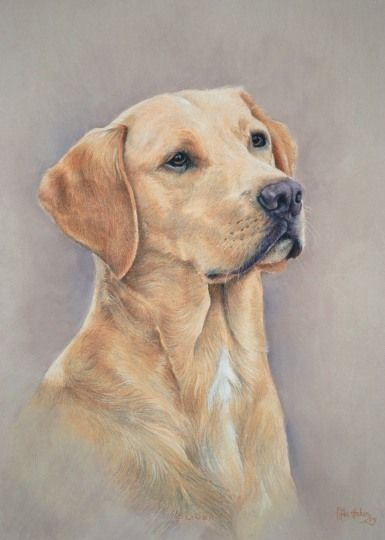 Dog Portrait Gallery Order An Oil Painting Of Your Pet Now At Www