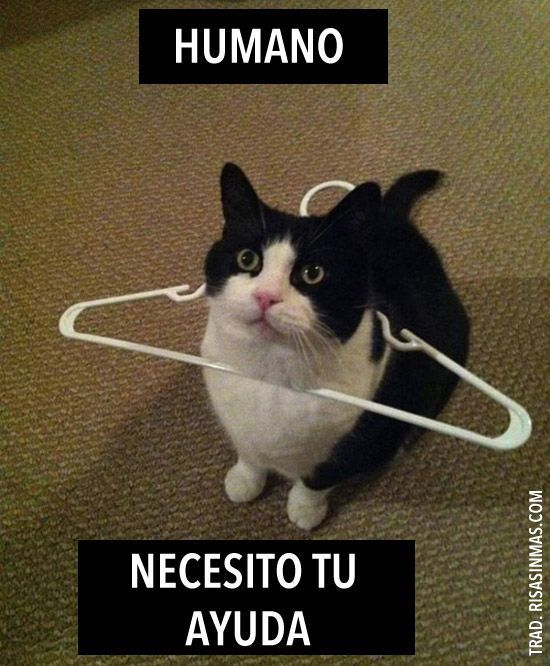 Fun Image For Teaching Spanish To Kids Spanish Learning Fun Spanish Images Humano Necesito Tu Ayuda Funny Cat Pictures Cute Funny Animals Funny Cat Memes