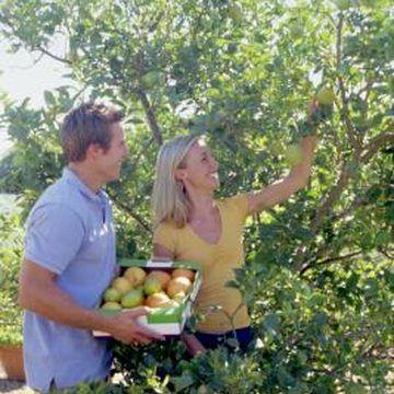 Homemade Dormant Oil Spray For Fruit Trees Fruit Trees Citrus Trees Pruning Fruit Trees