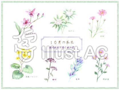 透明水彩で描く秋の花 10月の茶花 秋 花 水彩 透明水彩