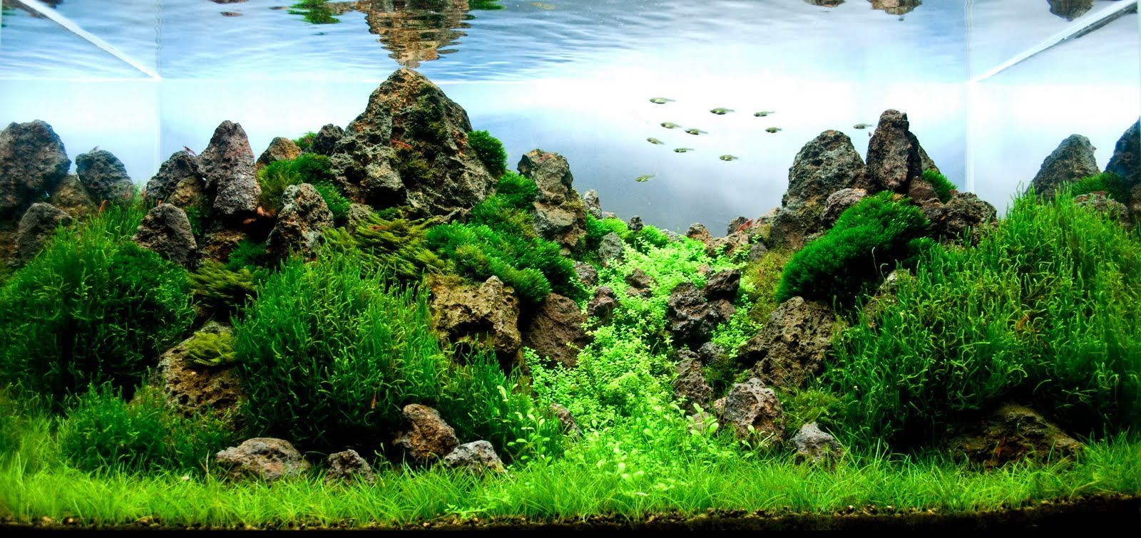 Freshwater fish in malaysia - Manage Your Freshwater Aquarium Tropical Fishes And Plants Aquatic Scapers Europe International Aquascaping Contest 2010 Results