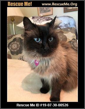 California Ragdoll Rescue Adoptions Rescue Me Pet Adoption