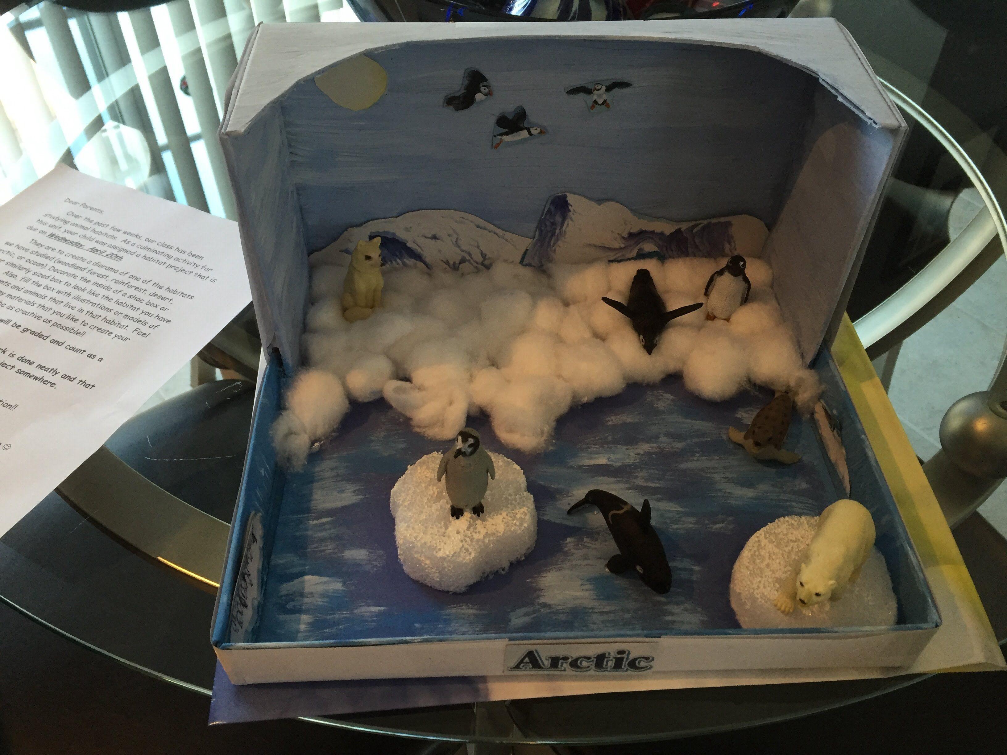 2nd Grade Project Arctic Diorama