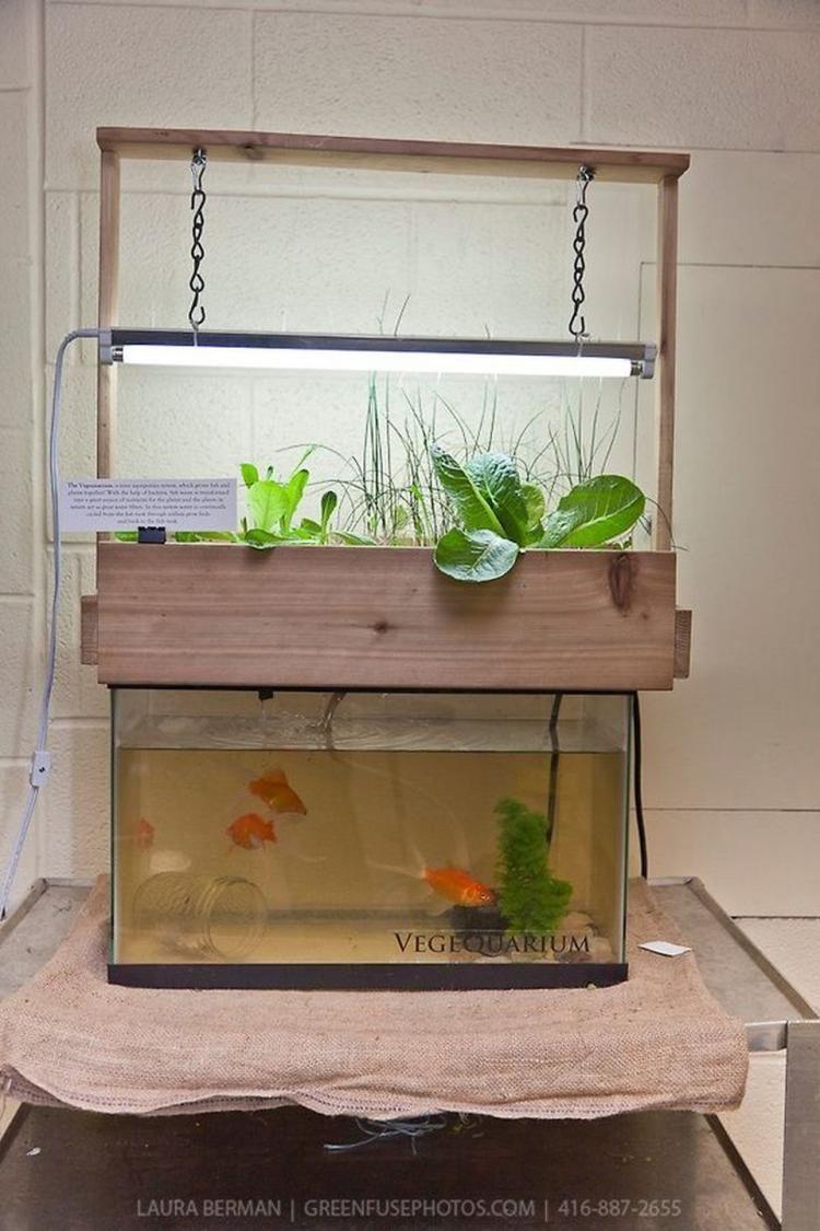 Garden and home zambia   Fascinating DIY Indoor Aquaponics Fish Tank Ideas  Growing Food