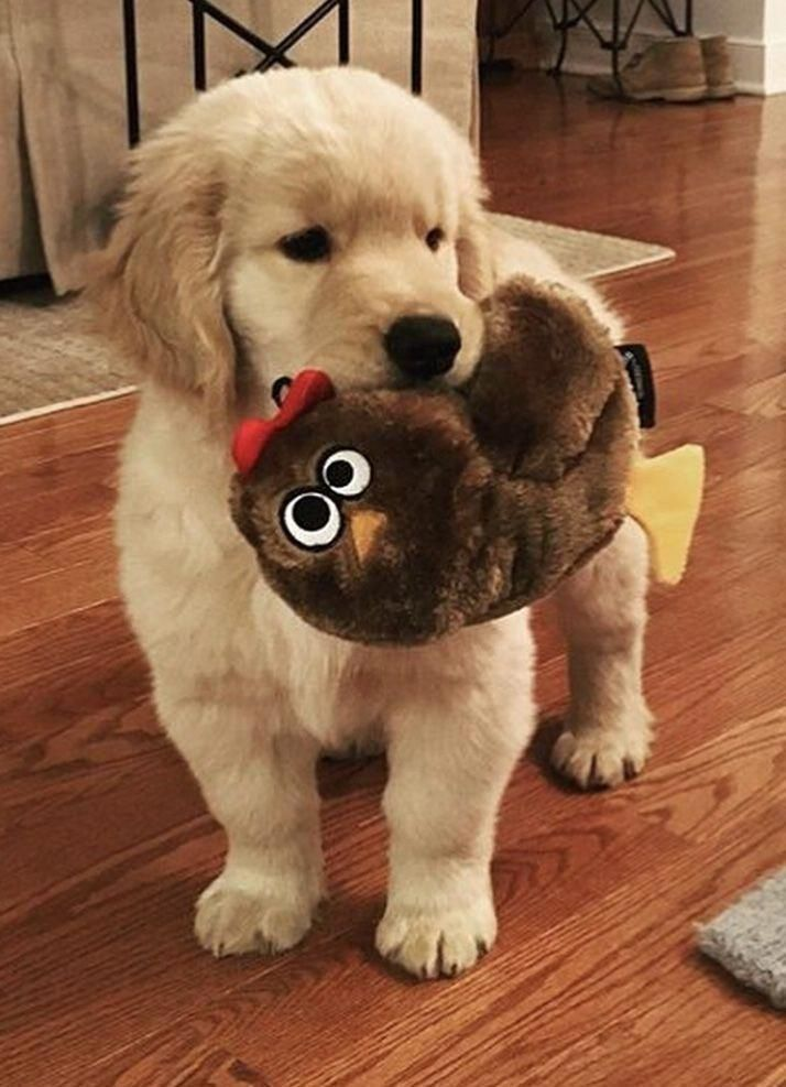 Find Out Additional Information On Golden Retriever Pups Browse Through Our Internet Site Cute Dogs Breeds Puppies Cute Baby Animals