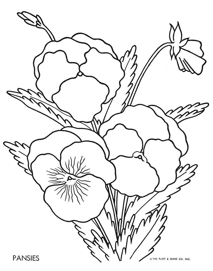 Flowers to Color Fritzi Brod Illustrator Platt and Munk