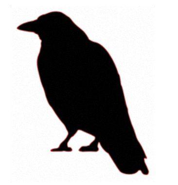 Cuervo Siluetas Dibujos Cuervo