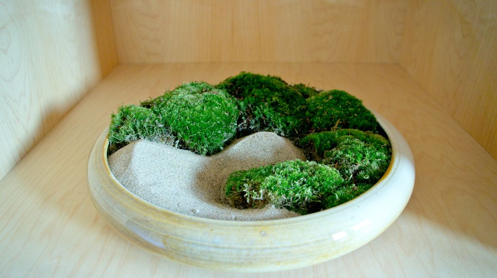 Captivating Indoor Gardening, Miniature Moss Lanscape With Sand Dunes