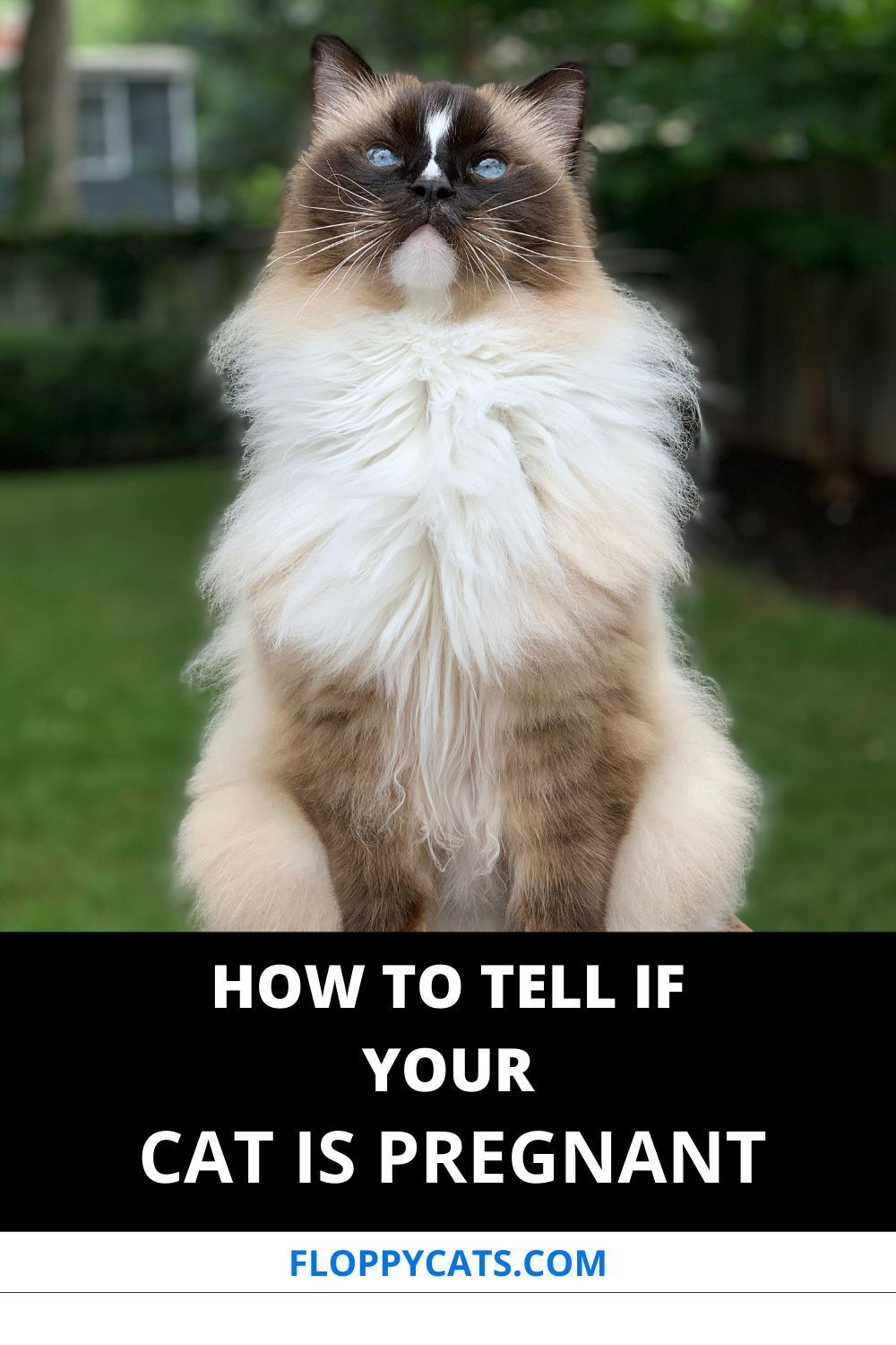 Pin On Best Cat Health Tips
